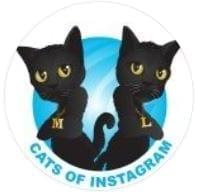 cats of instagram-1