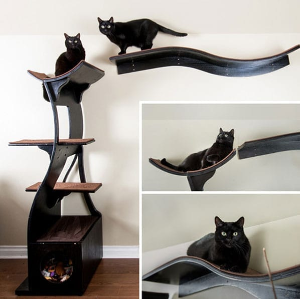 Black Cats on the shelves-2