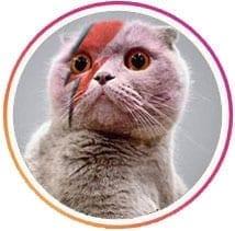 Cat Ziggy Stardust-nala-cat